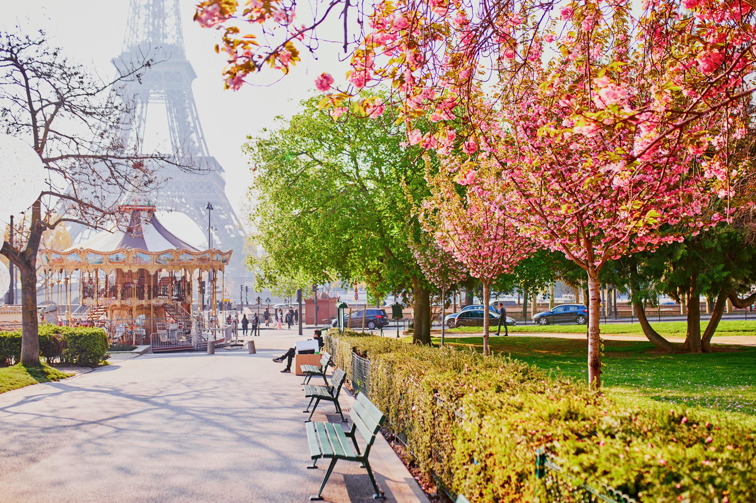 桜 フランス